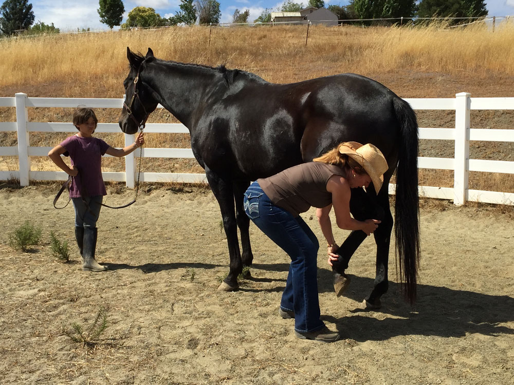 What I'm Learning from Doing Hanna Somatics with Horses ...