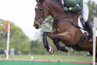 Research Project Involving Equestrian Jumping for 2016 ...